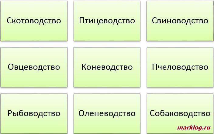 направления российского животноводства